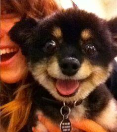 Voici la magnifique bouille de ce chiot qui fait un grand sourire à la webcam sous la demande de sa maîtresse qui le porte