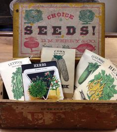 Seed Box Seed Catalogs, Seed Packets, Seeds, Boxes, Gift Wrapping, Gardening, Antiques, Green, Vintage