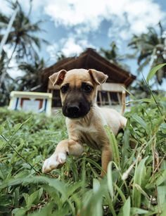 I always love photographing the pups that I see along our travels. They're always so inquisitive and happy. Philippines Travel, Snorkeling, Us Travel, Puppy Love, Adventure Travel, Pitbulls, Travel Destinations, Waterfall, Hiking