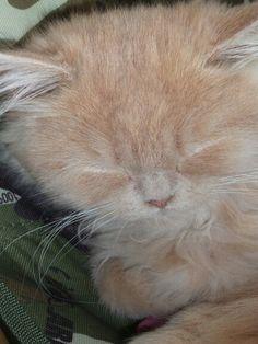 Uykucu