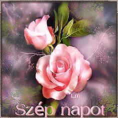 Good Day, Good Morning, Rose, Flowers, Plants, Facebook, Videos, Buen Dia, Buen Dia
