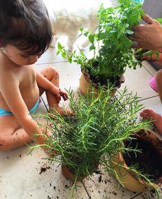 Mini Horta para crianças! 50 atividades para crianças nas férias de verão   Mamãe Plugada