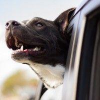 #dogalize Accessori auto: quelli utili per portare in vacanza cani #dogs #cats #pets