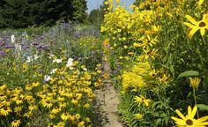 Im September strahlen im Staudenbeet Sonnenhut (Rudbeckia), Goldrute (Solidago) und Sonnenblume (Helianthus) um die Wette