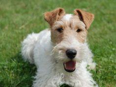 Langhaarfell pflegen: So bleibt das Hundehaar schön – Foto: (CC) flickr / Alicia Nijdam    www.einfachtierisch.de