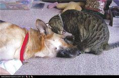 Kittehs R Owr Friends: Love Nudge