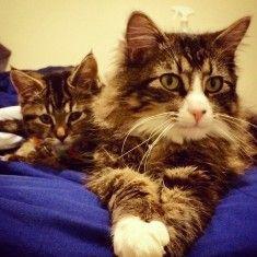 images de chats sympa 174 sur http://ift.tt/1oohFRS