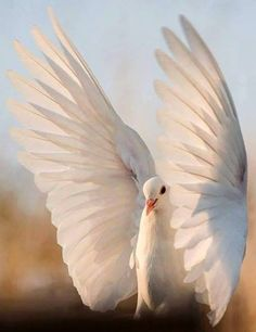 don't call me betty: Photo Beautiful Birds, Beautiful World, Animals And Pets, Cute Animals, Exotic Animals, Dove Pigeon, Frida Art, Peace Dove, Dont Call Me