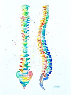 """anatomy drawing medical Watercolor Anatomical Spine - High quality print of my original """"Anatomical Spine"""" watercolor painting. Shipped in a cellophane slip and sturdy mailer. Larger sizes available upon request via email. Medical Drawings, Medical Art, Medical Humor, Spine Drawing, Male Figure Drawing, Medical Anatomy, Anatomy Drawing, Human Anatomy Art, Yoga Anatomy"""