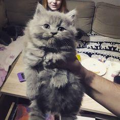 Muriendo lentamente de amor Por qué no puedo tener más gatos? Donde caben dos caben tres :( #catsofinsta #catsoftheworld #catstagram #catsofinstagram #muerodeamor #ilovecats