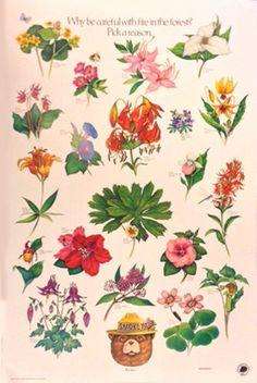 I wish I still had all my old Smokey the Bear Posters :-( Vintage Smokey the Bear Poster: Flowers Pick a Reason by datamodel