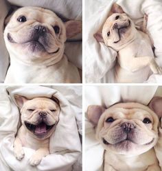 Possibly the happiest puppy ever...