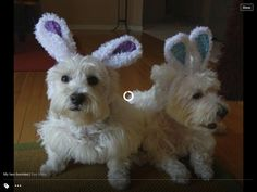 Two Easter  bunnies