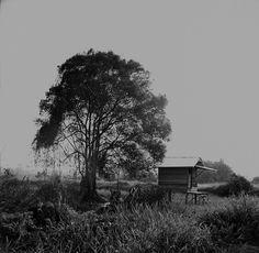 hideous wood cabin
