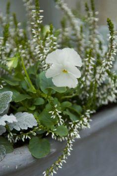 Composition jardini re t de fleurs blanches et plantes - Plantes fleuries d automne ...