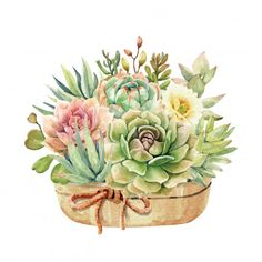 Watercolor collection cactus cacti and succulents in pots with rope ribbon. Watercolor Succulents, Watercolor Cactus, Watercolor Leaves, Cacti And Succulents, Watercolor Art, Watercolor Wedding, Cactus Flower, Floral Flowers, Cactus Pot