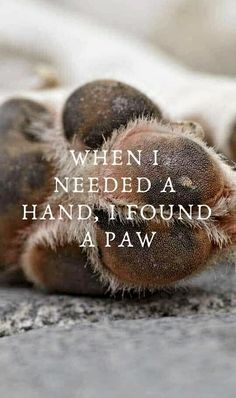 I never thought I would get another dog but she ha art breeds cutest funny training bilder lustig welpen Best Dog Toys, Personalized Dog Collars, Dog Quotes, Dog Best Friend Quotes, Family Quotes, Movie Quotes, Funny Quotes, Life Quotes, Dog Care