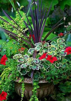 Container Gardening Inspiration : Creative Home Expressions.  Red cordyline, geranium Mrs. Pollock, red petunia, creeping jenny