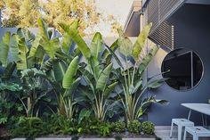 A courtyard garden haven 😌. A courtyard garden haven 😌. Tropical Backyard Landscaping, Tropical Garden Design, Backyard Garden Design, Landscaping Ideas, House Landscape, Landscape Design, California Backyard, Outdoor Gardens, Plants