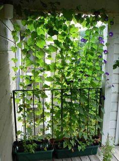 Hoe creëer je privacy in de tuin?