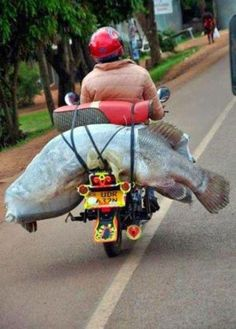 Meanwhile in Uganda -what's on the back of the Boda Boda? Uganda is on Lake Victoria.