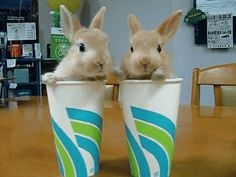 21 Bunnies You Won't Believe Actually Exist #refinery29  http://www.refinery29.com/the-dodo/51#slide-13  These two and their semi-synchronized twitches....