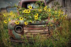 Ford Pickup Trucks, Chevy Trucks, Lifted Trucks, Ford 4x4, Dually Trucks, Lifted Chevy, Vintage Trucks, Old Trucks, Vintage Auto