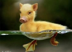 34 Animal Mash-Ups Thatll Make You Question The World As You Know It animals silly animals animal mashups animal printables majestic animals animals and pets funny hilarious animal Animals And Pets, Baby Animals, Funny Animals, Cute Animals, Photoshopped Animals, Wild Animals Photography, Wildlife Photography, Animal Mashups, Tier Fotos