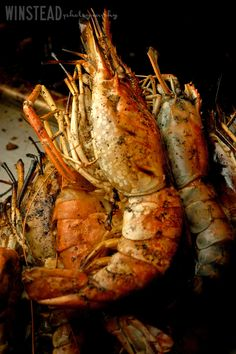 Fresh caught lobsters waiting for diners at Katie + David's One&Only Ocean Club reception in Nassau, Bahamas (destination wedding) ©WinsteadPhotographyInc