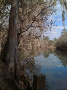 Suwannee River, Florida