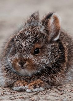 Snowshoe Hare by Tim Rains