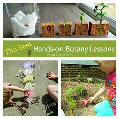 Botany best schools of communications