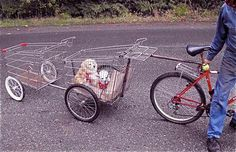 dogs transports