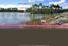 Nuevo decorado de http://vente-privee.com, en el que los webdesigners nos llevan al corazón del parque nacional de los Everglades, en Florida.  Un paisaje único en el mundo en el que cocodrilos y aligátores acechan un huevo muy especial ;-)