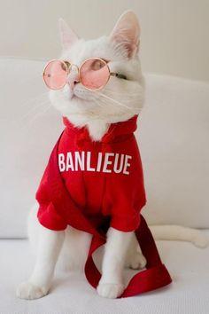 Cat costume for cat clothing - Katzenrassen Beautiful Cats Cute Cats And Kittens, Baby Cats, Cool Cats, Kittens Cutest, Cute Baby Animals, Funny Animals, Cute Cat Wallpaper, Cats Tumblr, Tier Fotos