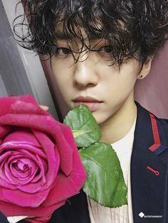 rose - yongguk