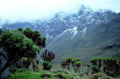 Rwenzori Mountains, Uganda.