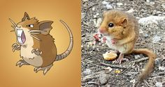 10 MORE Animals That Look Like Pokemon (or is it the other way ...