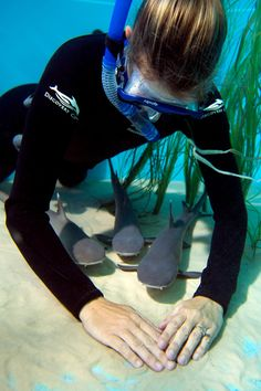 Baby Sharks at Discovery Cove #sharkweek