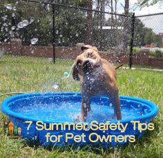 7 SUMMER SAFETY TIPS FOR PET OWNERS   Easy things you can do to keep your dog or cat safe in the heat