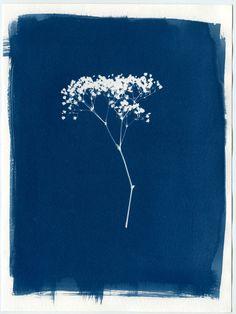 "Baby's Breath Cyanotype 9""x12"" Original Print, Botanical Photograph, Photogram, Blue, Poster, Decor, Wall Art, Fine Art, Historical Process"