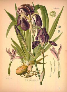 botanical print - 4 млн картинок. Поиск@Mail.Ru