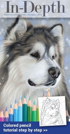 Colored pencils on pastelmat step by step tutorial with colored pencil techniques for fur, eyes and snowy background.