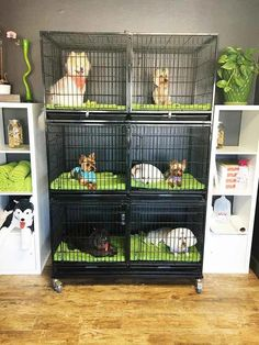 Resultado de imagen para dog grooming salons in small areas Dog Grooming Shop, Dog Grooming Salons, Dog Grooming Supplies, Dog Grooming Business, Dog Supplies, Terrarium Reptile, Dog Spa, Pet Hotel, Rabbit Cages
