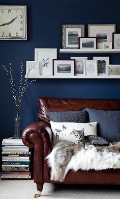 Beautiful inky blue walls in this living room with lots of picture frames on shelves. Luxurious leather sofa with soft furnishings. Rooms for you lifestyle wall. Living Room