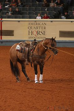 Just doin' his job (handsomely I might add...) Beautiful horse!