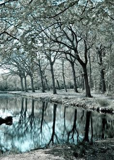 Surreal trees and water reflections