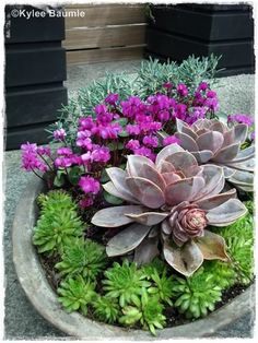 This container planting by Studio AB was just succulent perfection coupled with hardy cyclamen.