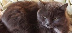 What I've Learned from Living with a Senior Cat