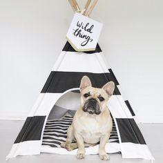French Bulldog Puppy enjoying the Tee Pee Lifestyle... #pipolli